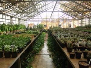 دانلود تحقیق گلخانه